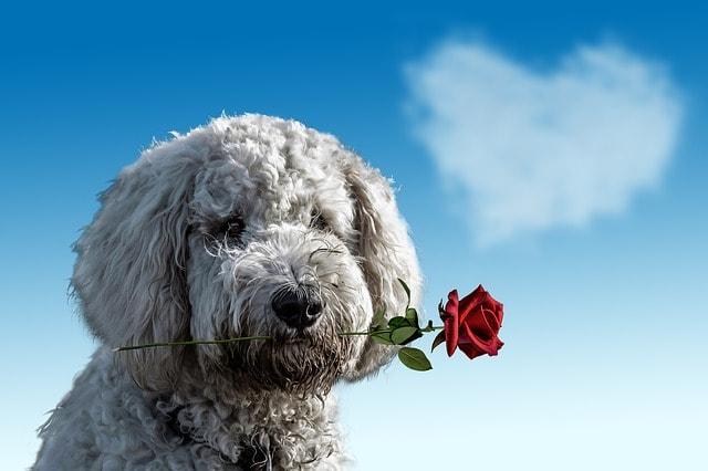 Hund Liebesmagnet